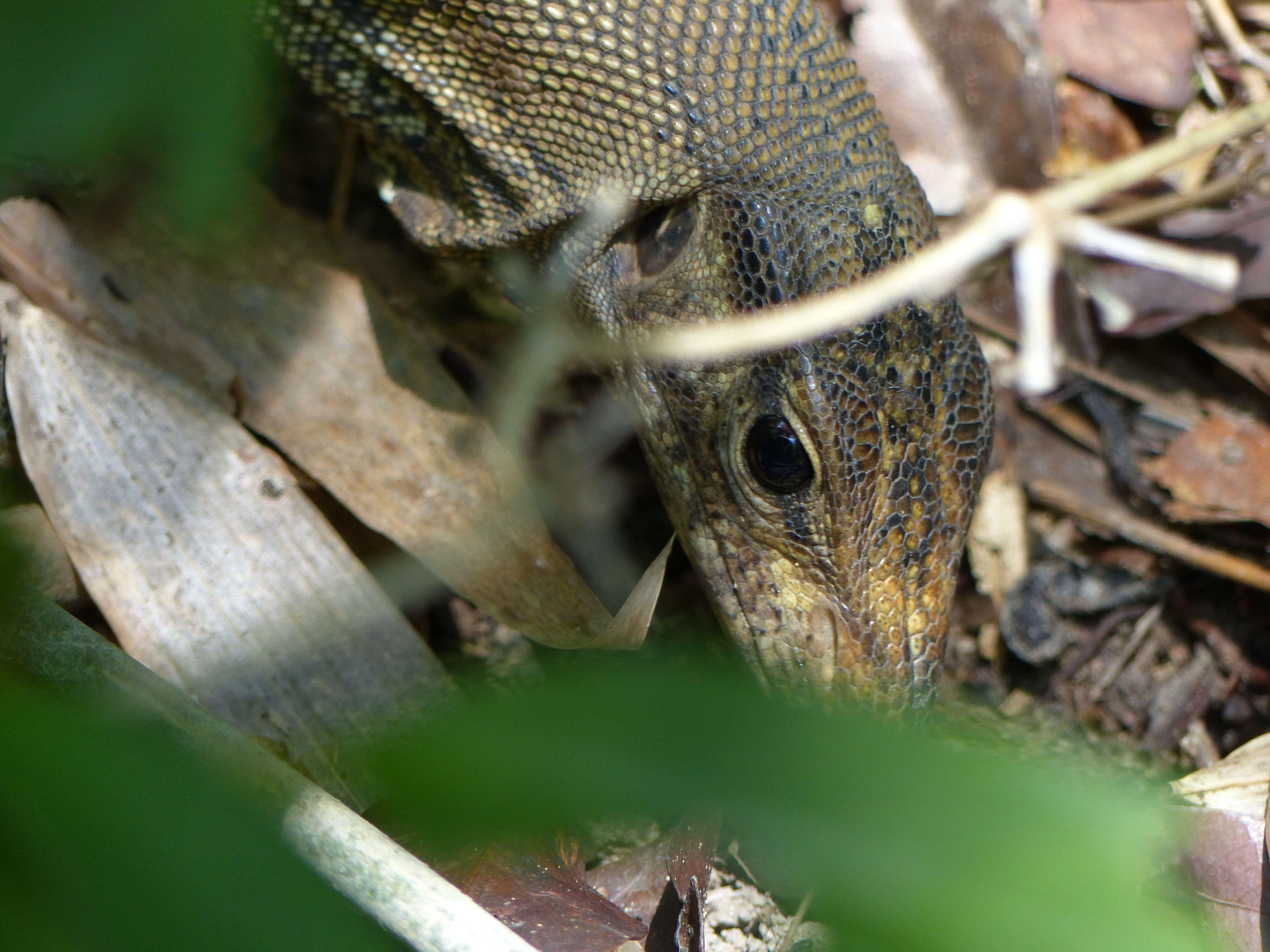 raptor (7)