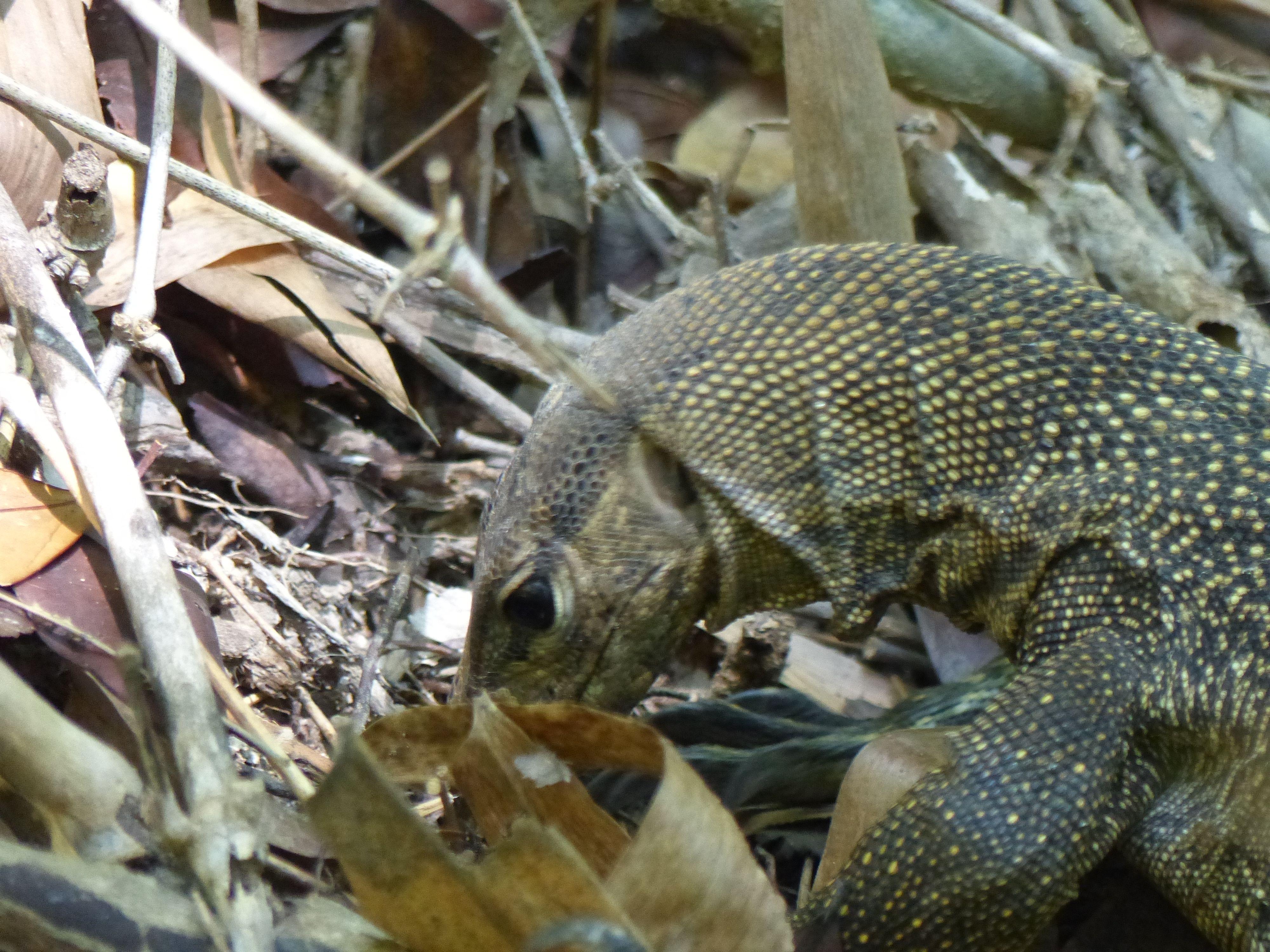 raptor (8)