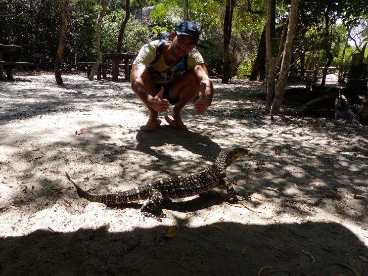 lace-monitor-lizard-varano-foto