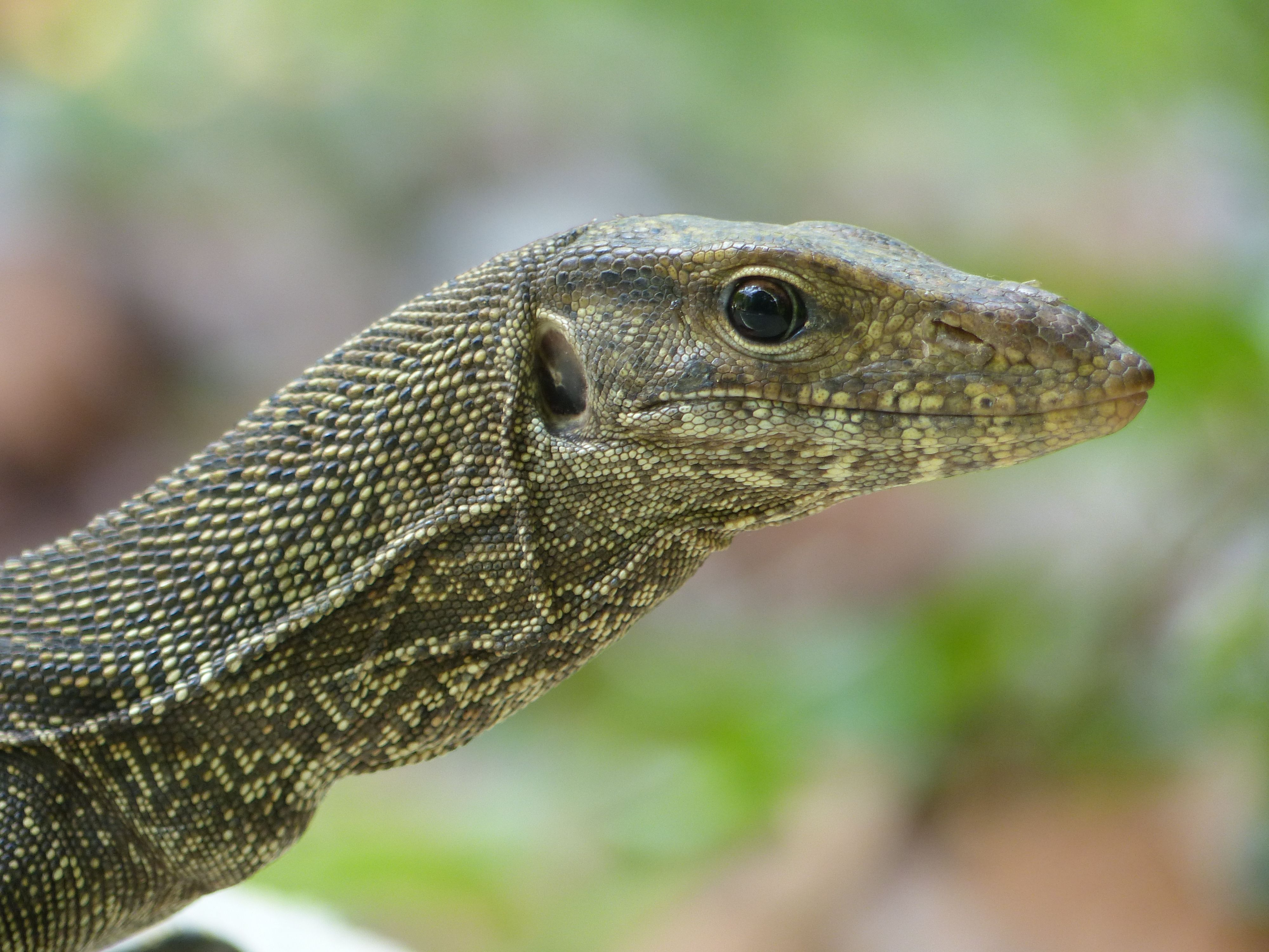 raptor (4)